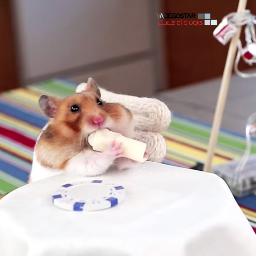 تصویر زیبا از یک سنجاب در یوتیوب